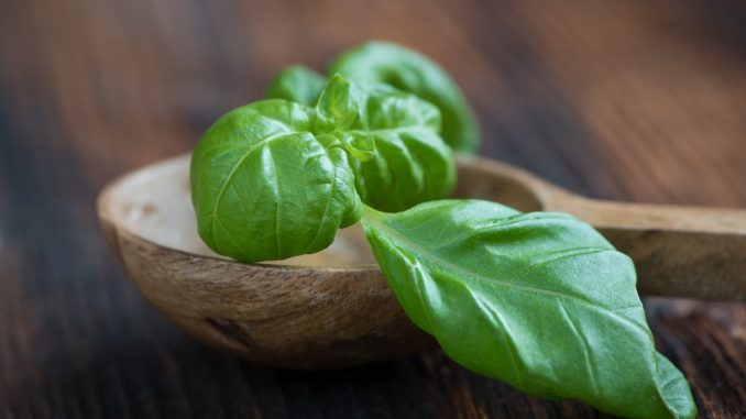 Jaké bylinky pomáhají na onemocnění žaludku?