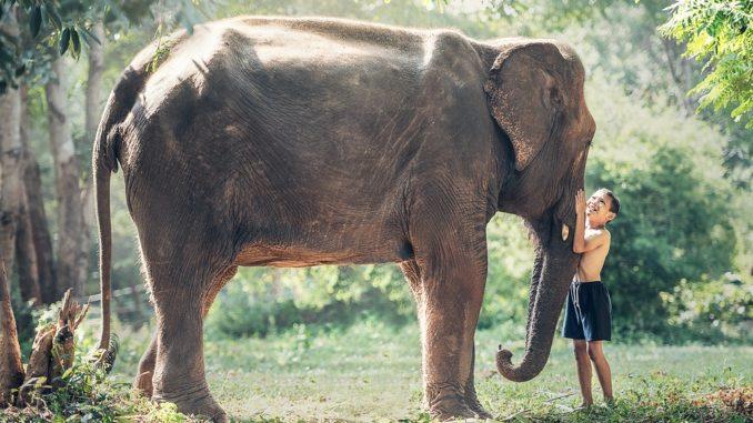 Záchranné stanice slonů jako jedno velké téma. Podívejme se na ně z obou stran