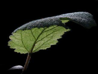 Jaké bylinky umí prodloužit život?